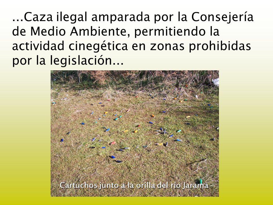 ...Caza ilegal amparada por la Consejería de Medio Ambiente, permitiendo la actividad cinegética en zonas prohibidas por la legislación...