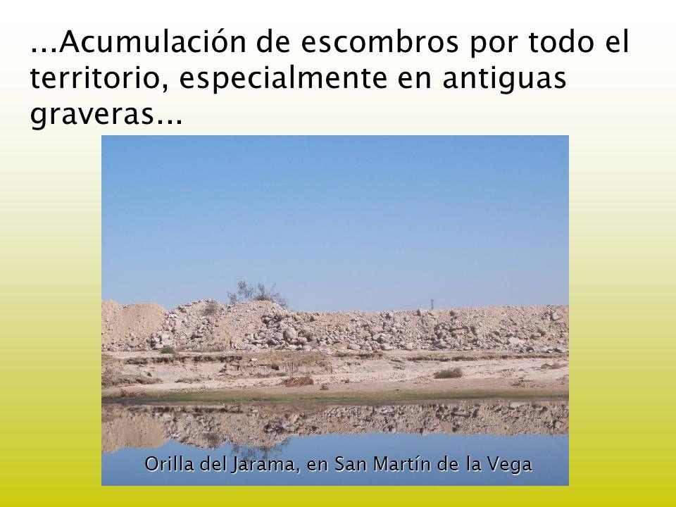 Orilla del Jarama, en San Martín de la Vega