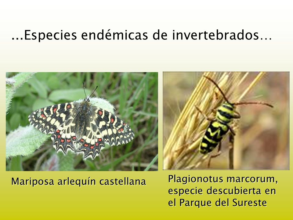 ...Especies endémicas de invertebrados…