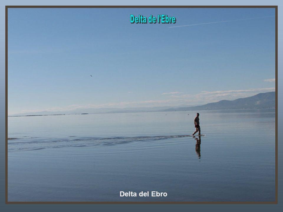 Delta de l Ebre Delta del Ebro