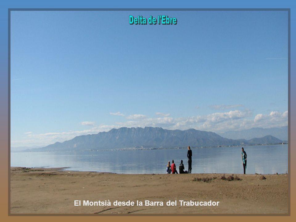 El Montsià desde la Barra del Trabucador