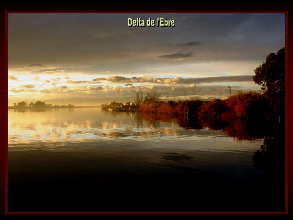 Delta de l Ebre