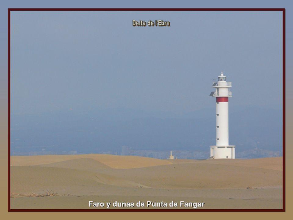 Faro y dunas de Punta de Fangar