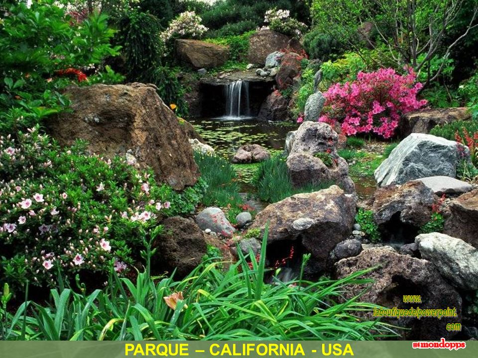 PARQUE – CALIFORNIA - USA