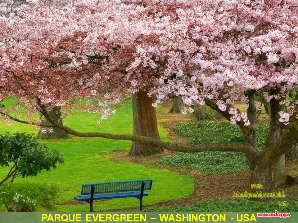 PARQUE EVERGREEN – WASHINGTON - USA
