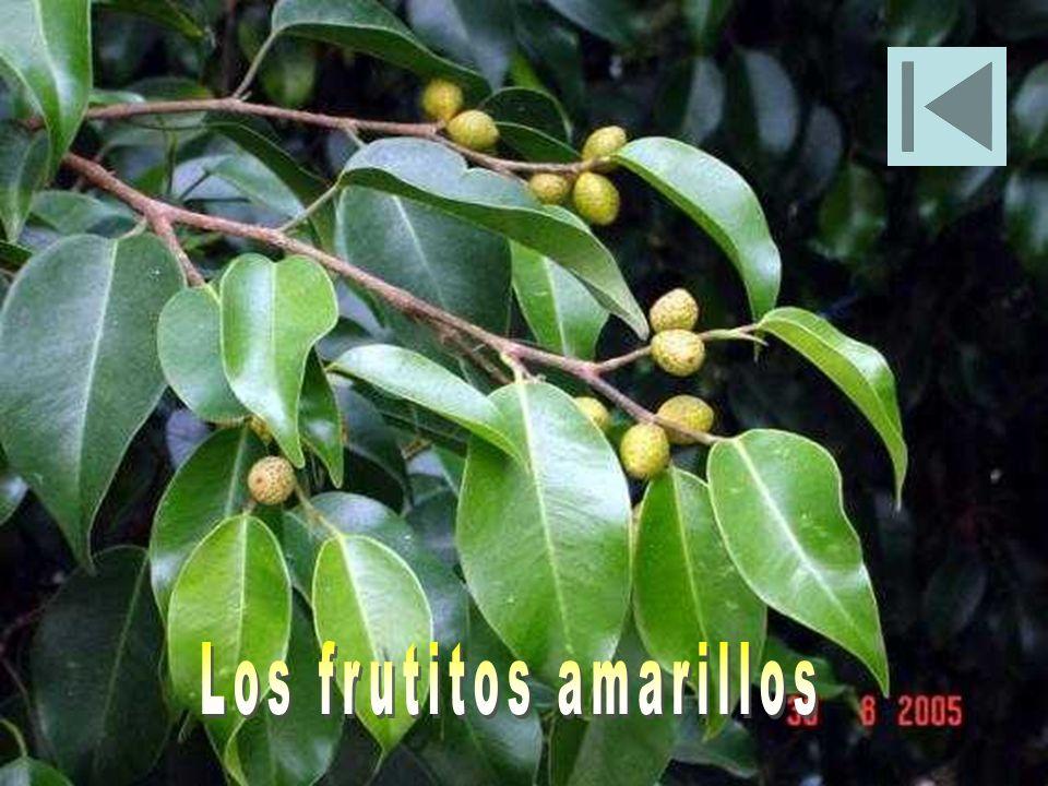 Los frutitos amarillos
