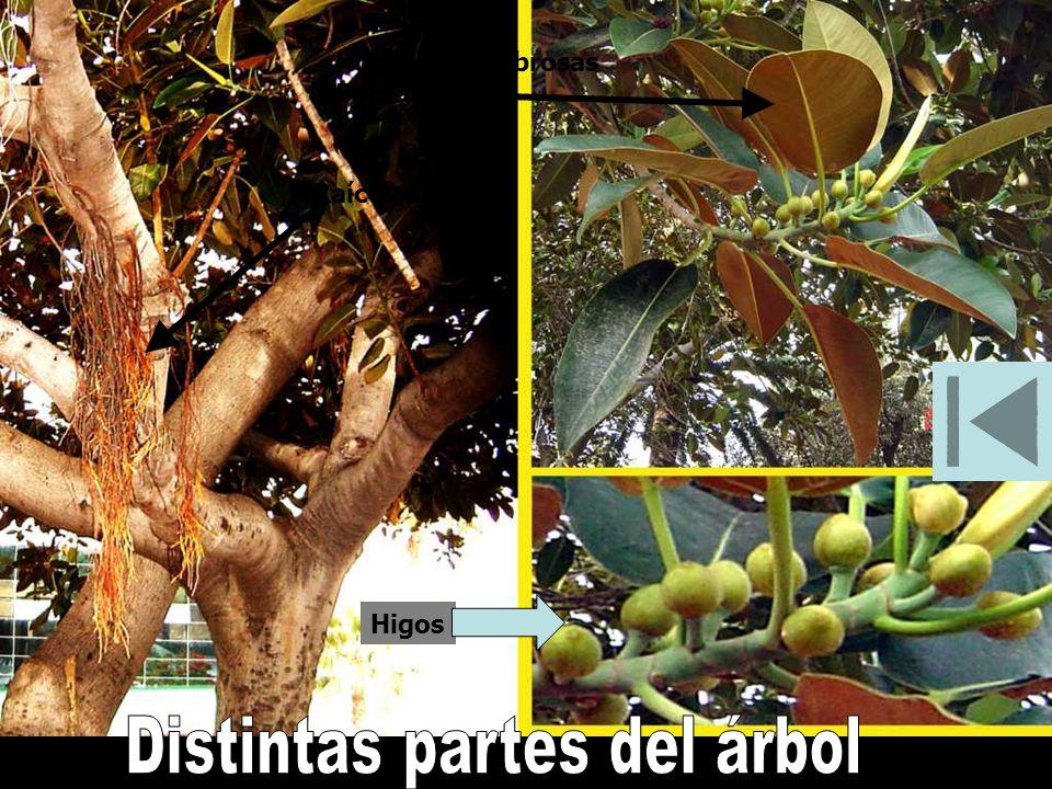 Distintas partes del árbol