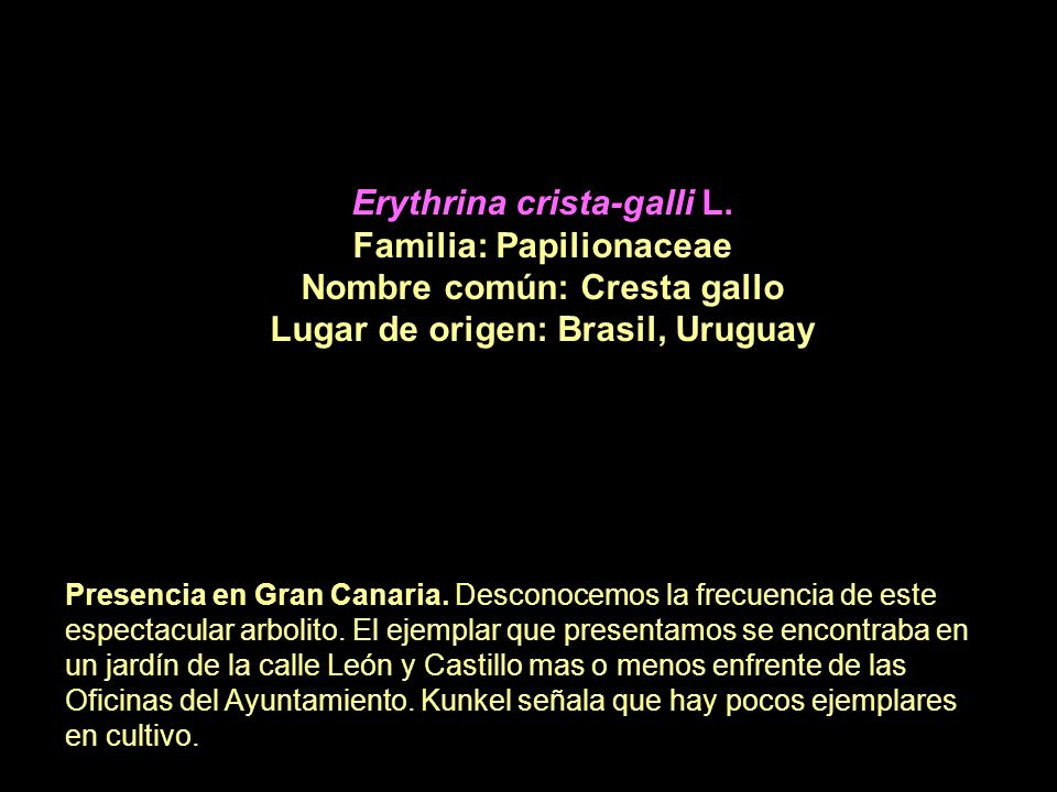 Erythrina crista-galli L. Familia: Papilionaceae
