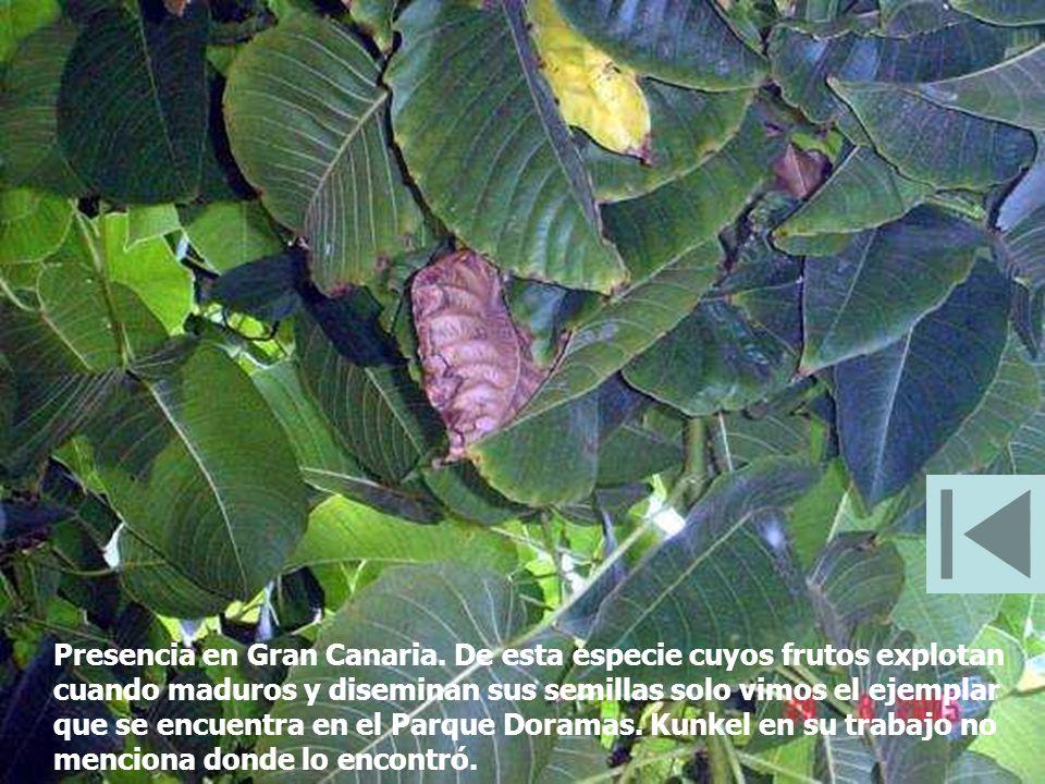 Presencia en Gran Canaria