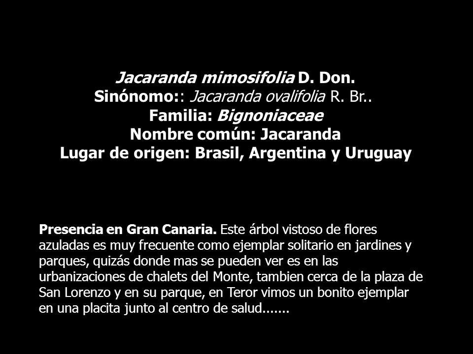 Jacaranda mimosifolia D. Don. Sinónomo:: Jacaranda ovalifolia R. Br..