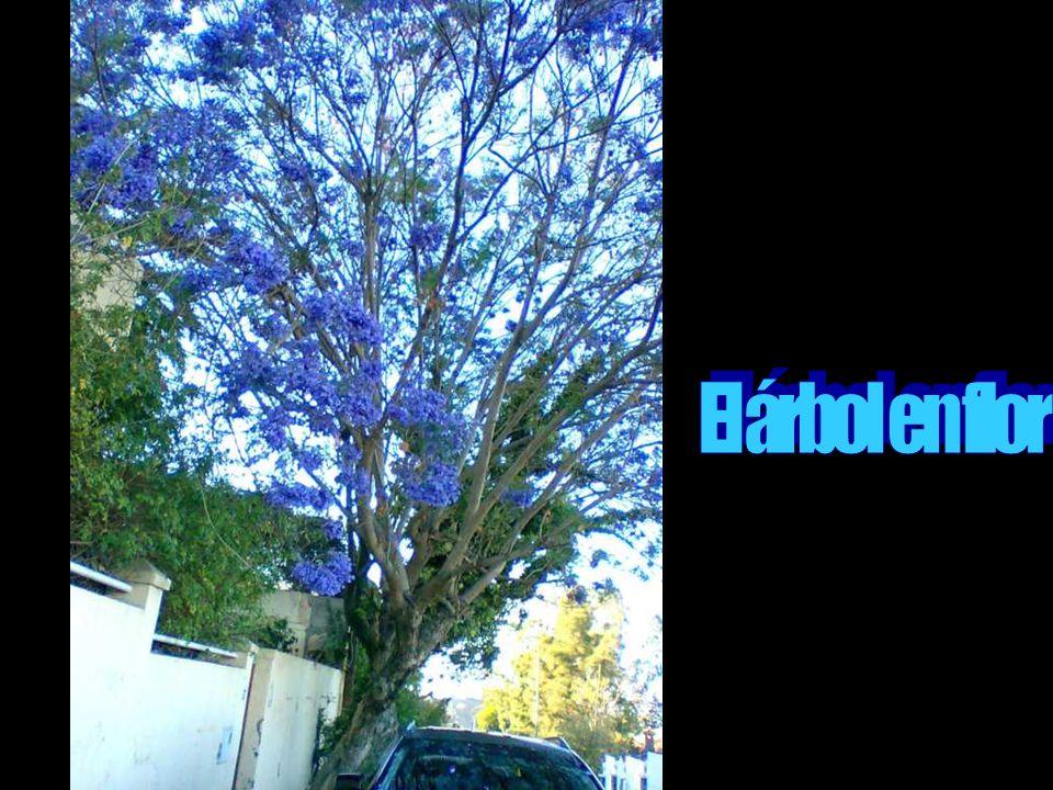 El árbol en flor