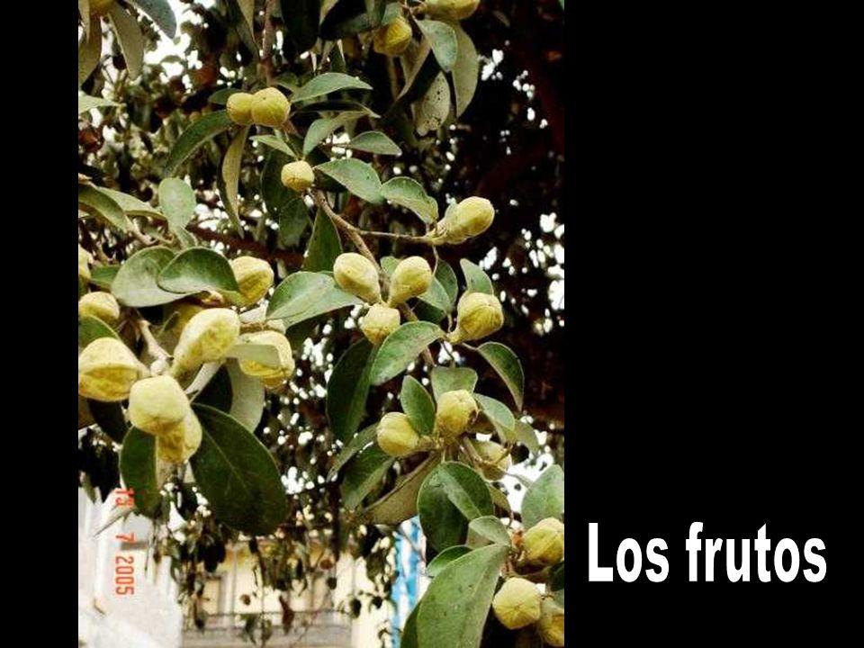 Los frutos