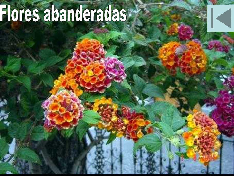 Flores abanderadas