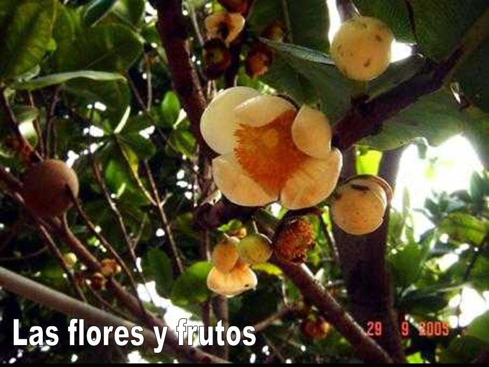 Las flores y frutos