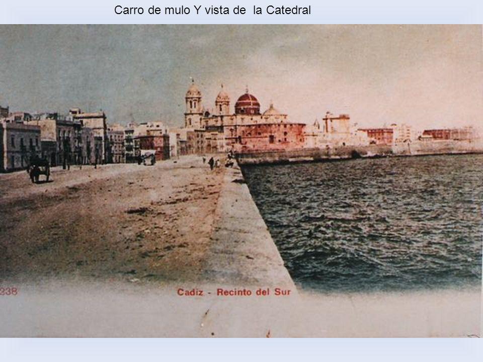 Carro de mulo Y vista de la Catedral