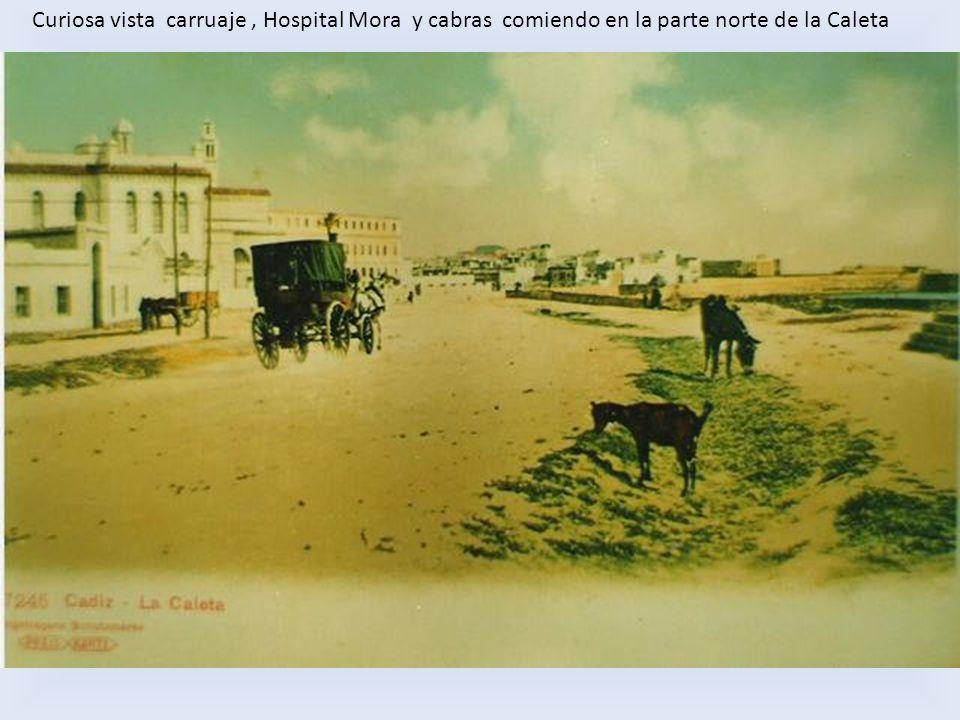 Curiosa vista carruaje , Hospital Mora y cabras comiendo en la parte norte de la Caleta