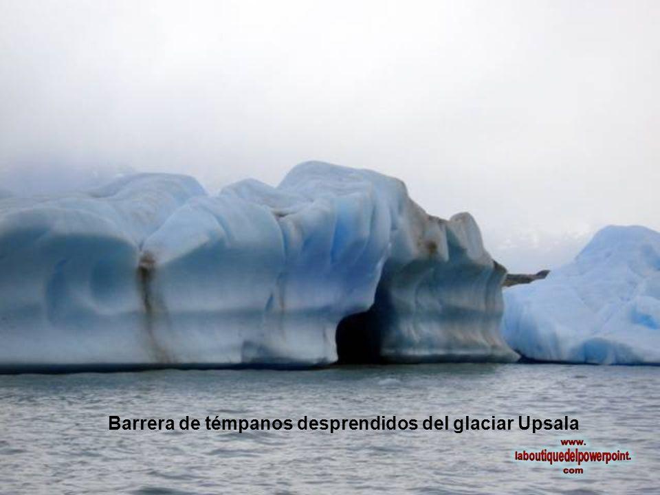 Barrera de témpanos desprendidos del glaciar Upsala