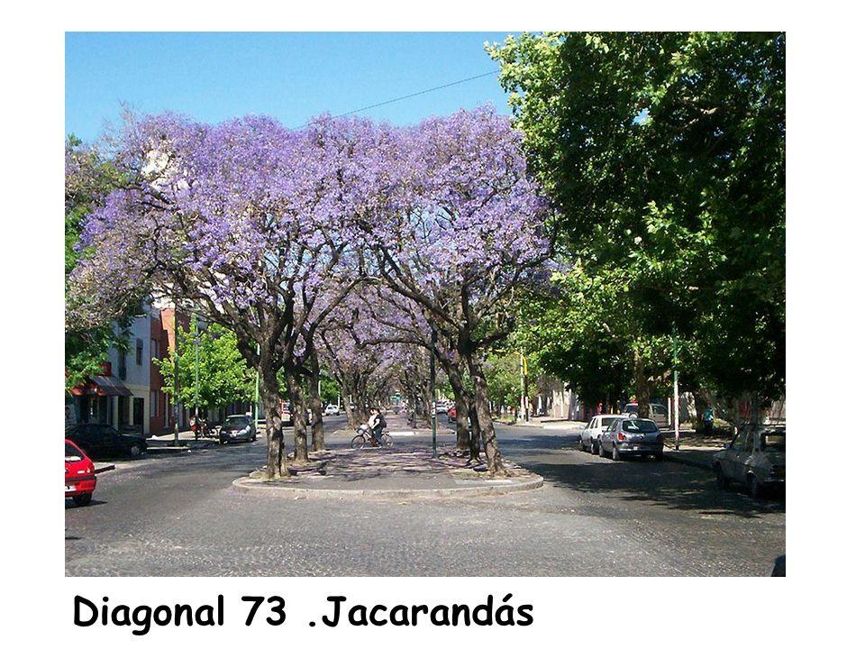 Diagonal 73 .Jacarandás