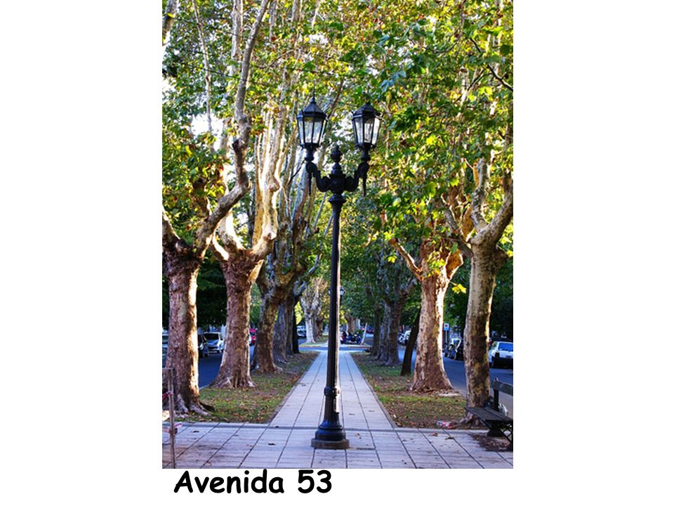 Avenida 53