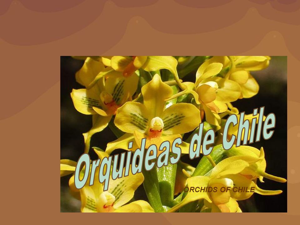 Orquideas de Chile ORCHIDS OF CHILE