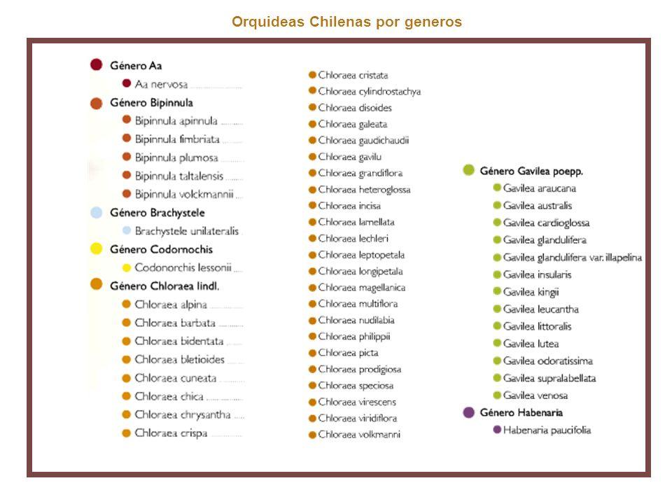 Orquideas Chilenas por generos