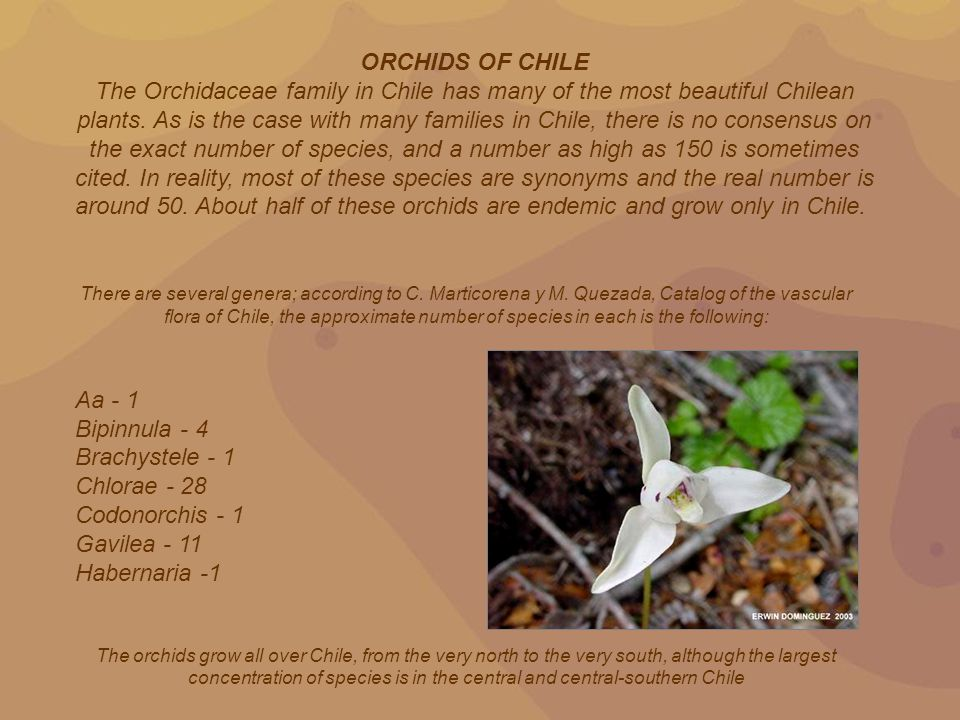 ORCHIDS OF CHILE