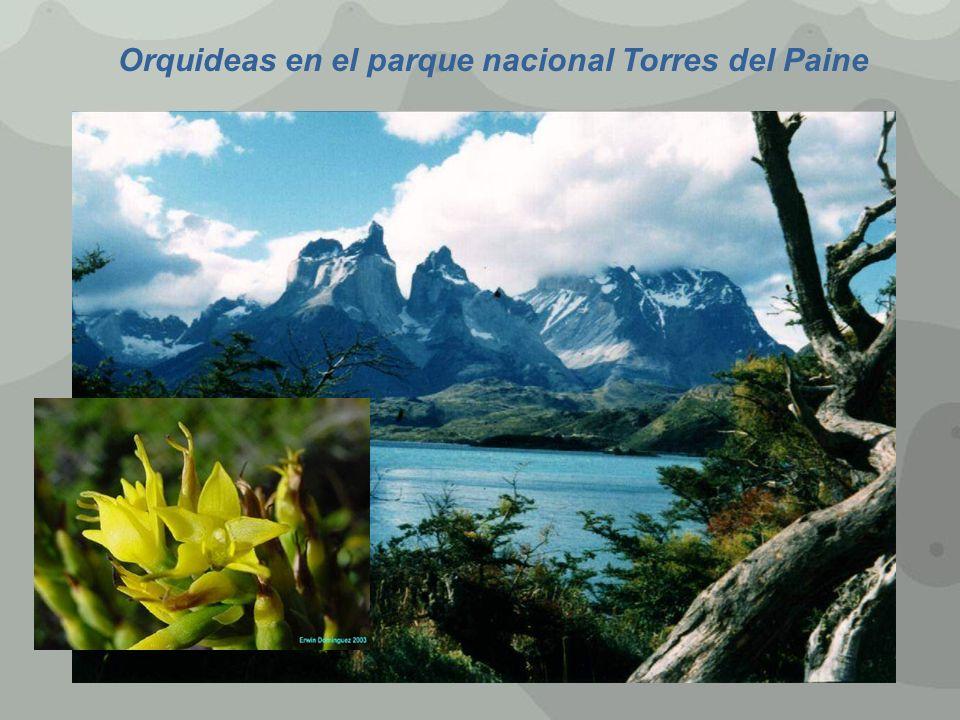 Orquideas en el parque nacional Torres del Paine