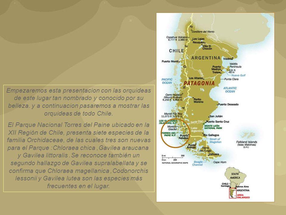 Empezaremos esta presentacion con las orquideas de este lugar tan nombrado y conocido por su belleza. y a continuacion pasaremos a mostrar las orquideas de todo Chile.