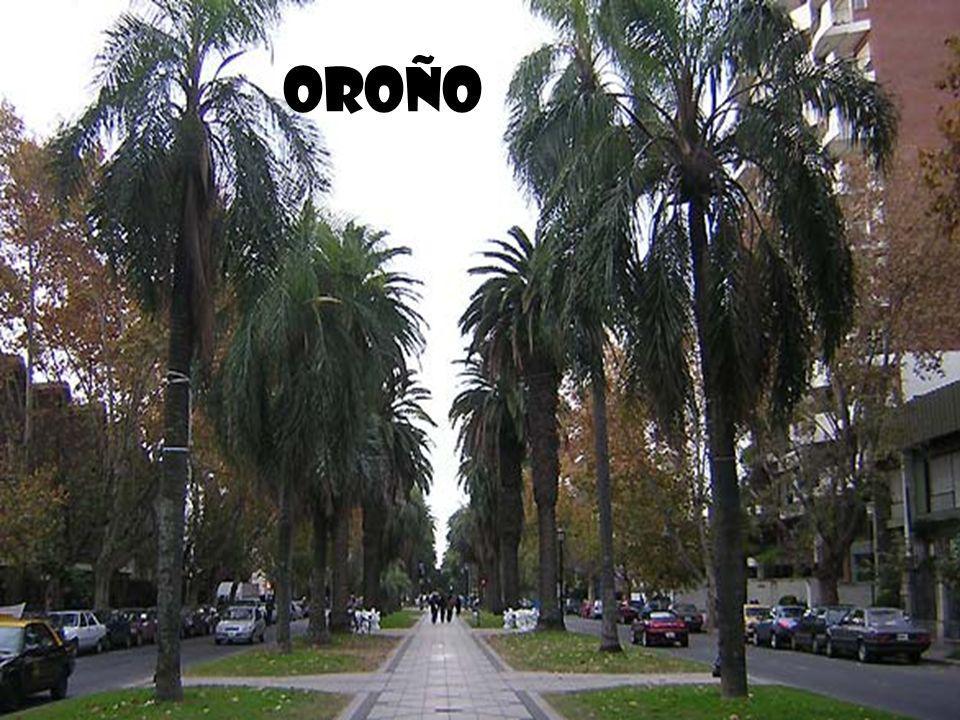 Oroño