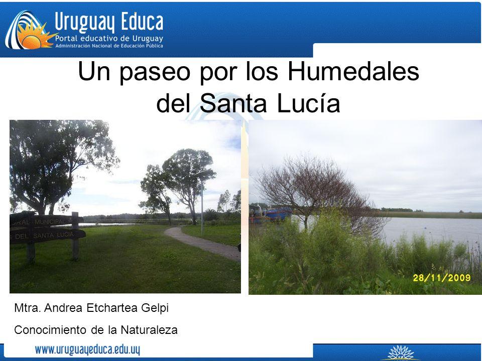 Un paseo por los Humedales del Santa Lucía