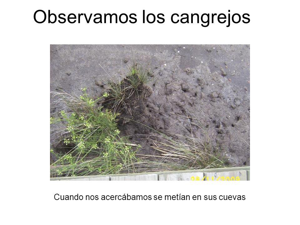 Observamos los cangrejos