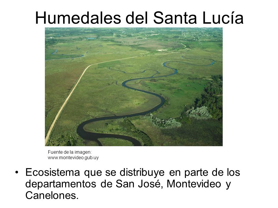 Humedales del Santa Lucía