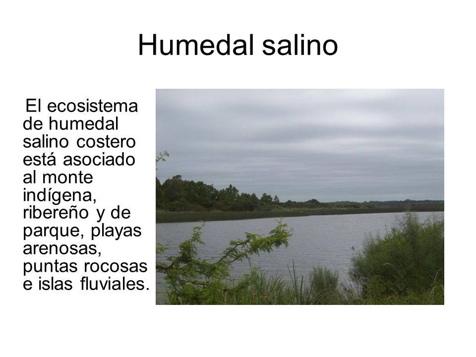 Humedal salino