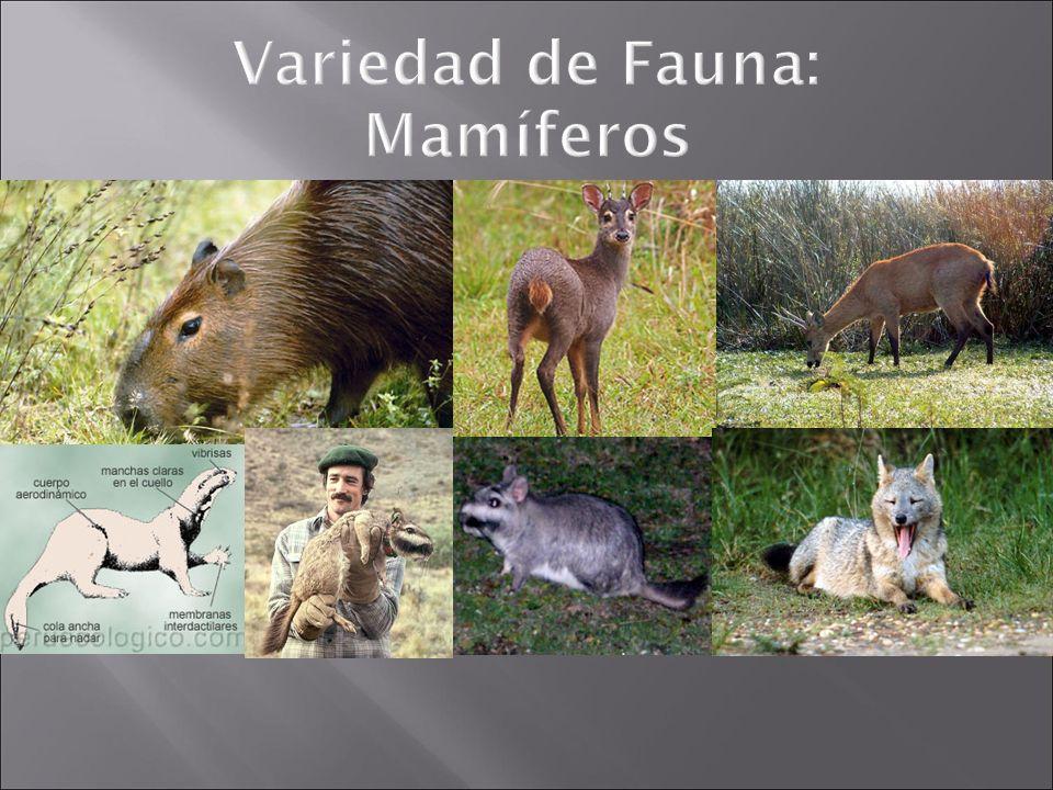 Variedad de Fauna: Mamíferos