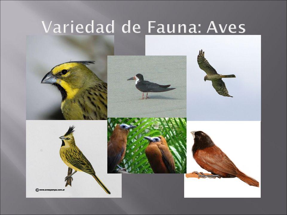 Variedad de Fauna: Aves