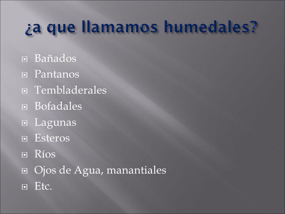 Bañados Pantanos Tembladerales Bofadales Lagunas Esteros Ríos Ojos de Agua, manantiales Etc.