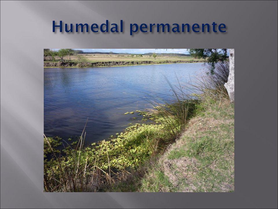 Humedal permanente