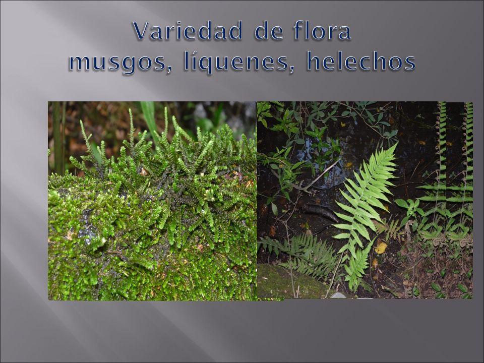 Variedad de flora musgos, líquenes, helechos