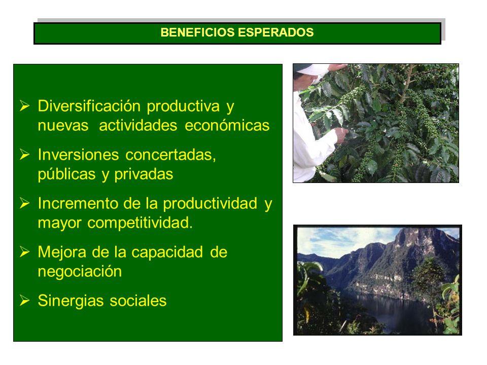 Diversificación productiva y nuevas actividades económicas