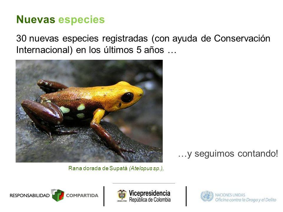 Nuevas especies 30 nuevas especies registradas (con ayuda de Conservación Internacional) en los últimos 5 años …