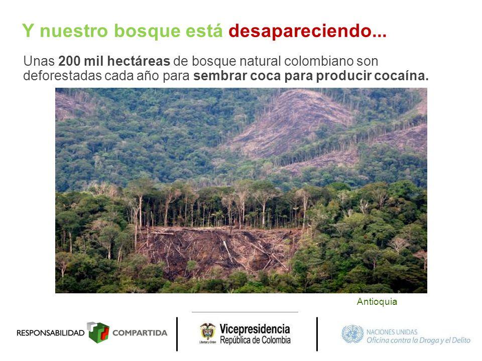 Y nuestro bosque está desapareciendo...