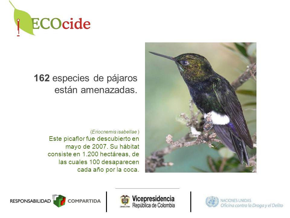 162 especies de pájaros están amenazadas.