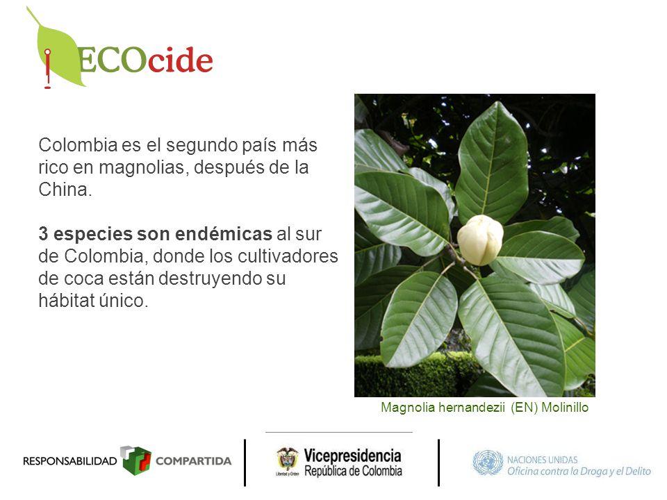 Colombia es el segundo país más rico en magnolias, después de la China.