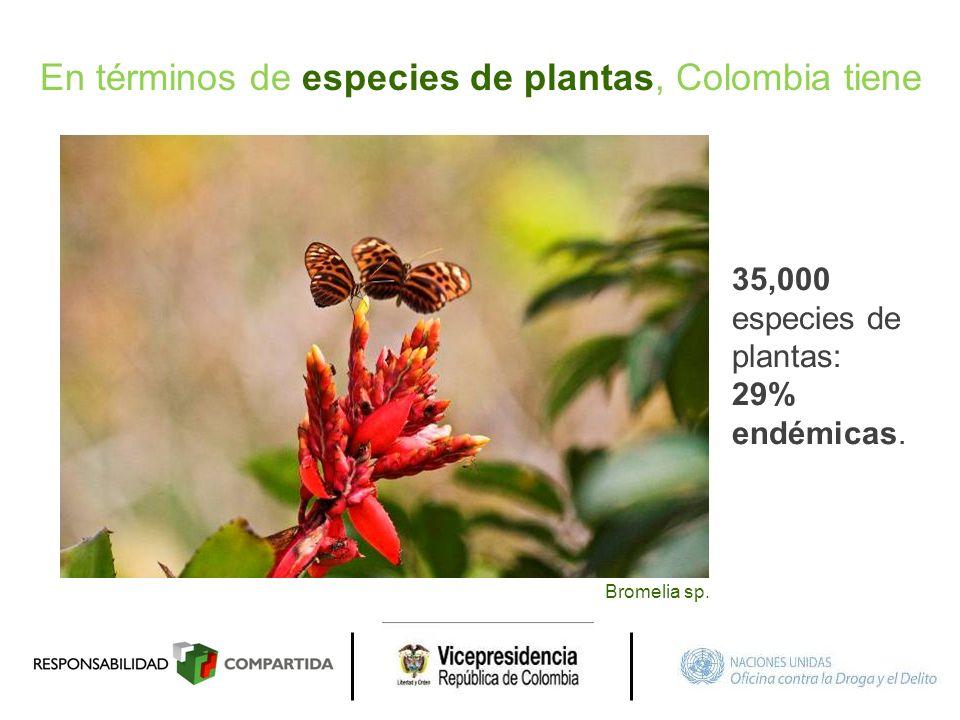 En términos de especies de plantas, Colombia tiene