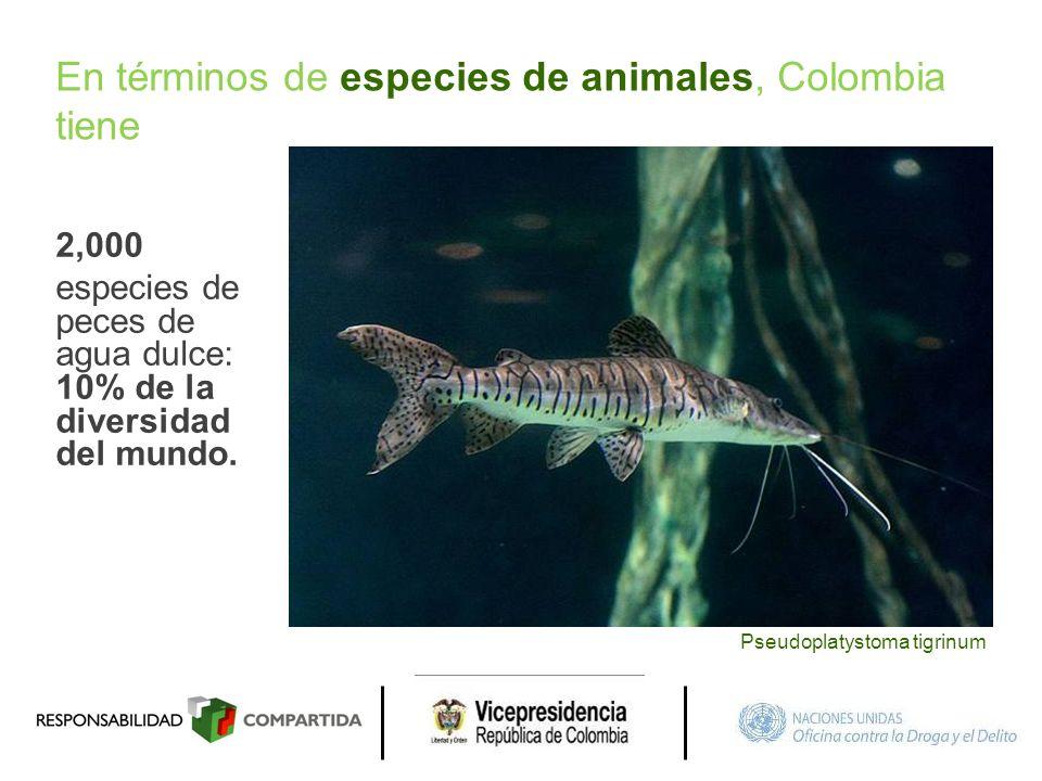 En términos de especies de animales, Colombia tiene