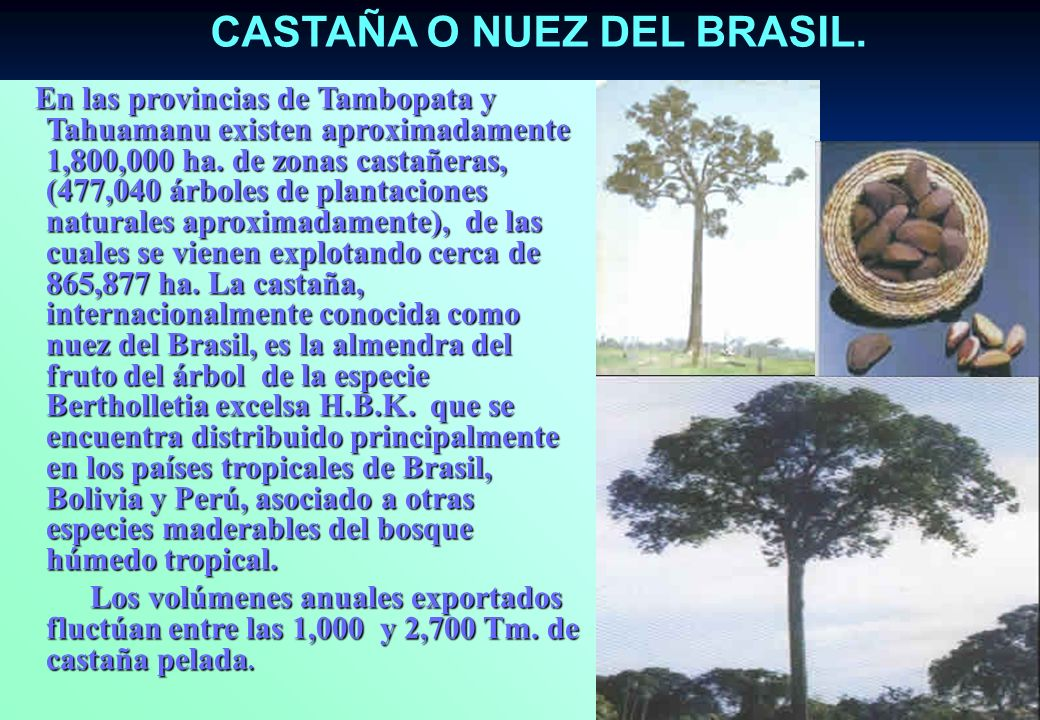 CASTAÑA O NUEZ DEL BRASIL.