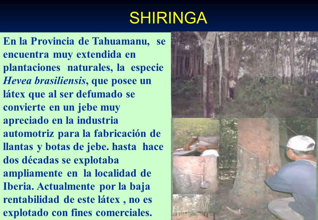 SHIRINGA