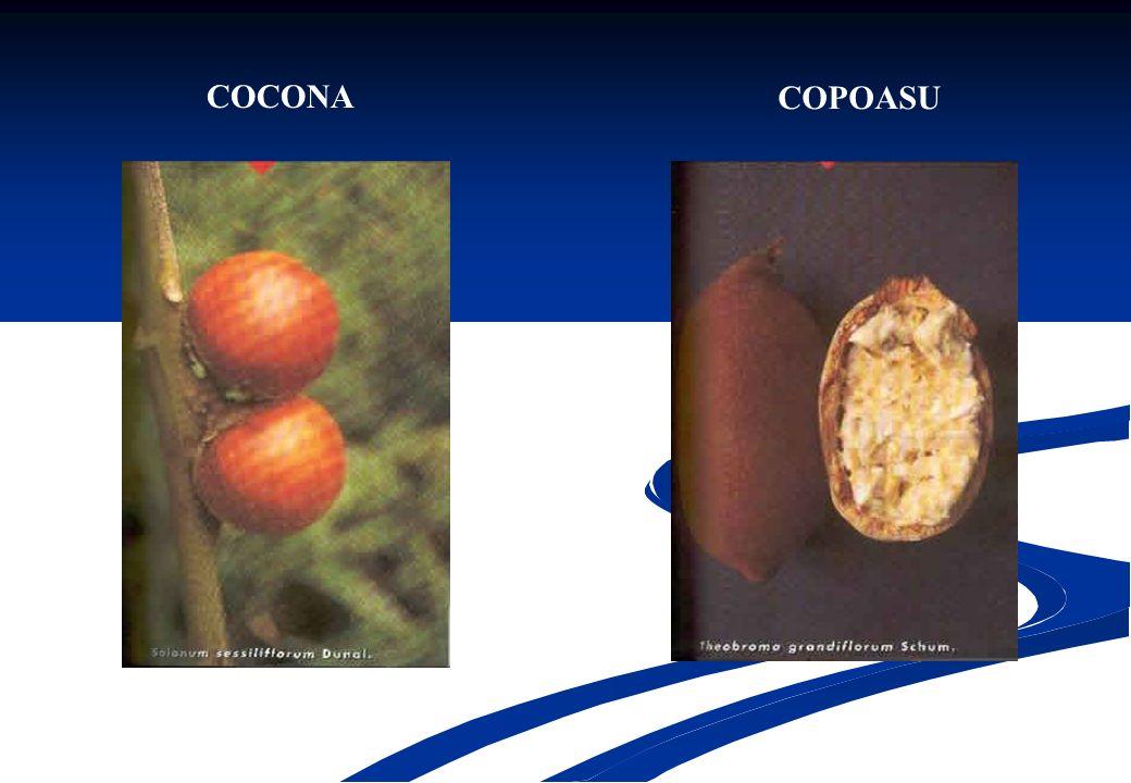 COCONA COPOASU