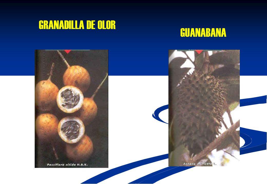 GRANADILLA DE OLOR GUANABANA