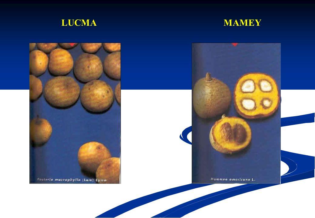LUCMA MAMEY